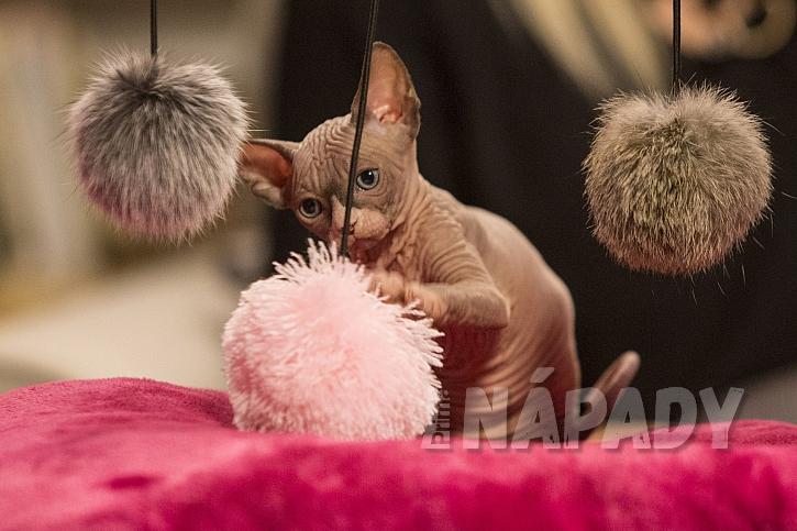 Pořiďte kočkám dostatek hraček