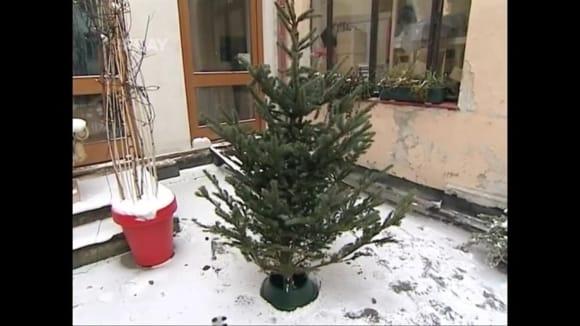 Jak udržovat vánoční stromek