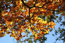 Svatý Jiljí (1. září) jasný, bude podzim krásný aneb září vlidové meteorologii