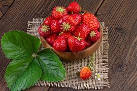 Péče o jahodník obecný od jara do zimy