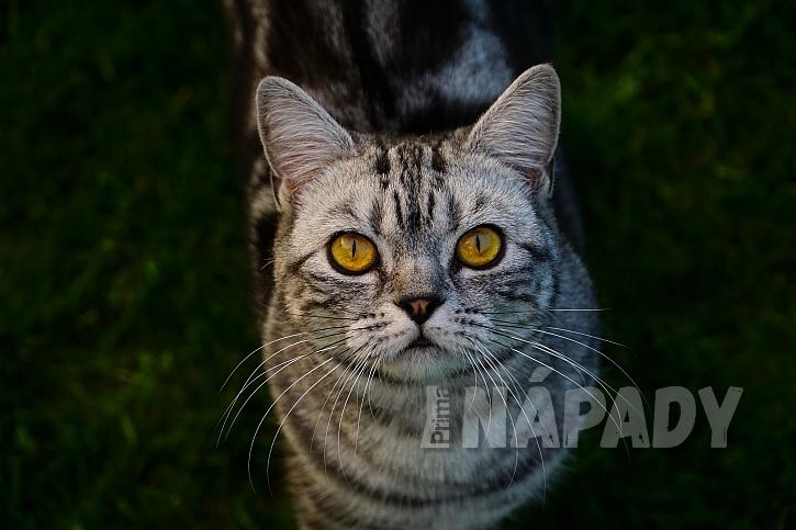 černý kočička tuk