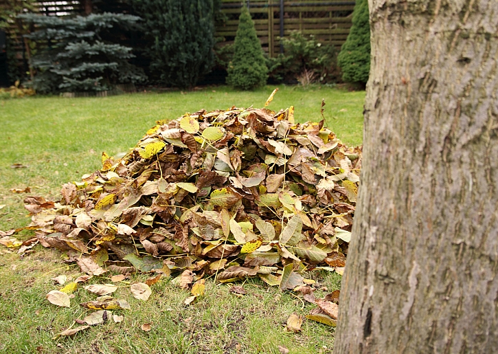 Hromada listí