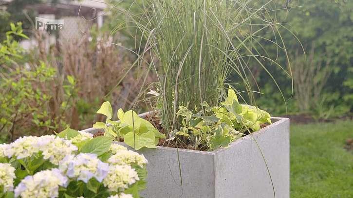 Pěstování květin na terase