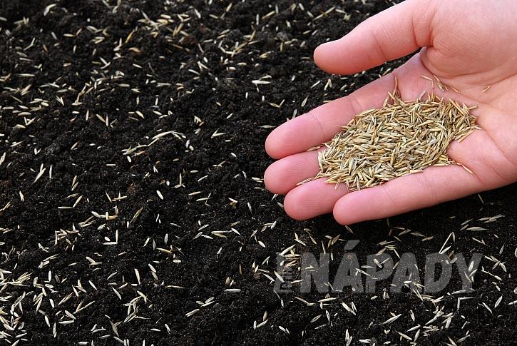 Setí travního semene