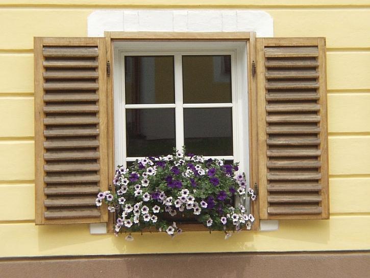 Jak pěstovat balkónové květiny