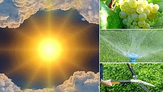 Předpověď počasí na druhý srpnový víkend aneb Rychlé rady do zahrady