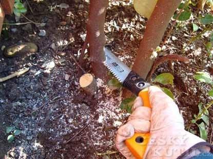 Fiskars: šikovné novinky pro zahradníky