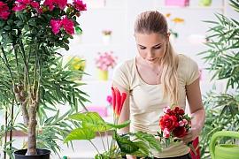 Svilušky jsou pro naše pokojové květiny pohroma, zlikvidujte je postřikem