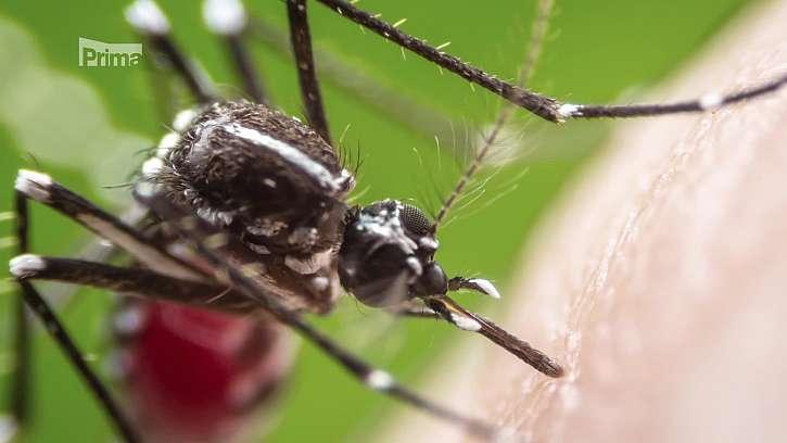Ochrana proti bodavému hmyzu