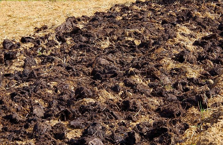 Hnojení, jeho význam a využití v zahradě (Zdroj: Depositphotos)