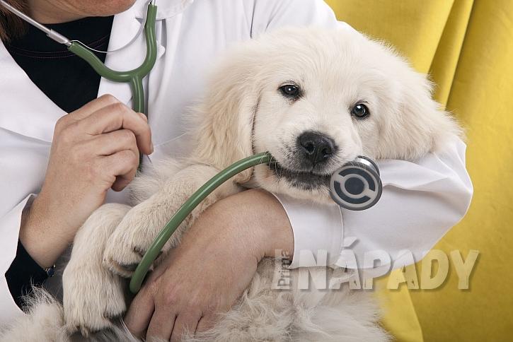 Pejsek u lékaře