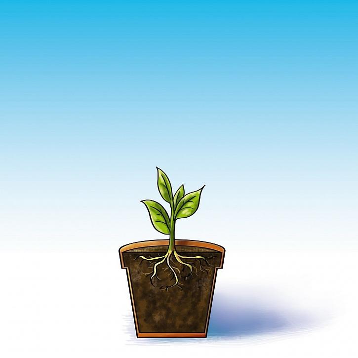 Živá voda pro vaše rostliny