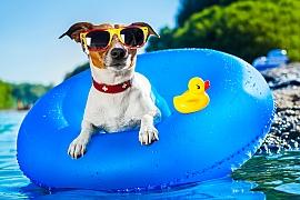Pozor na letní vedra u psů. Mohou přinést i nehezké žaludeční potíže