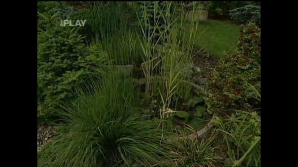 Na co si dát pozor, když zakládáme zahradu