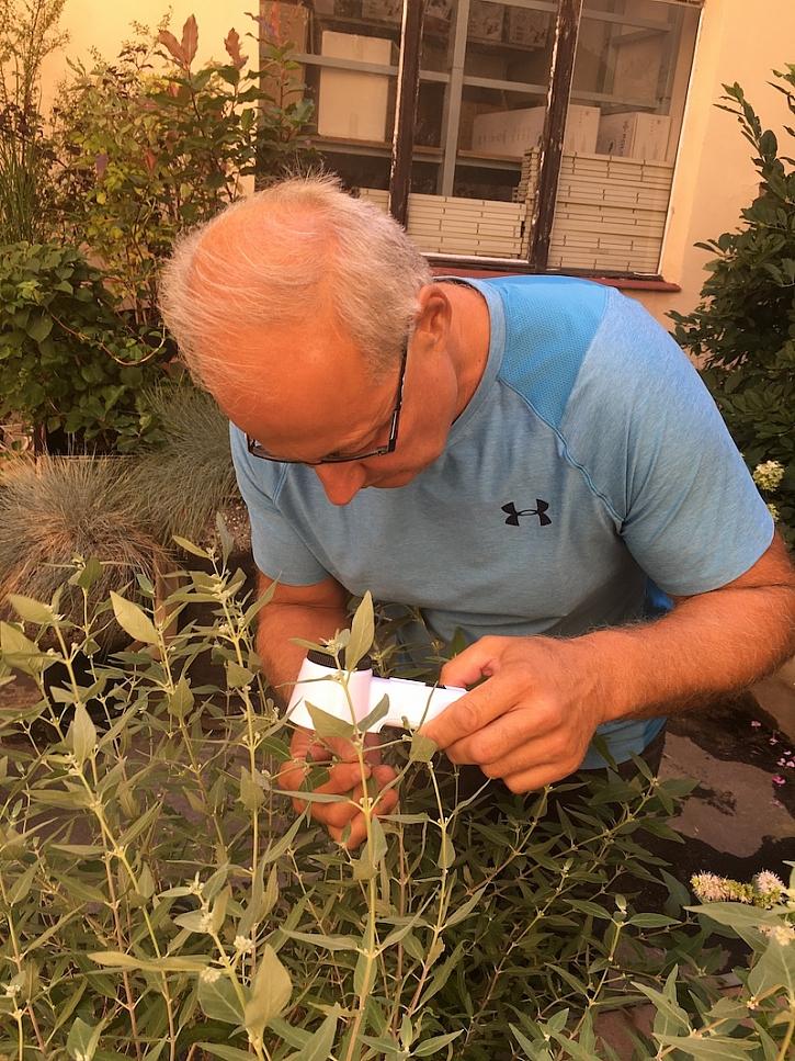 Honza Kopřiva se svou nepostradatelnou lupou zkoumá napadenou rostlinku.