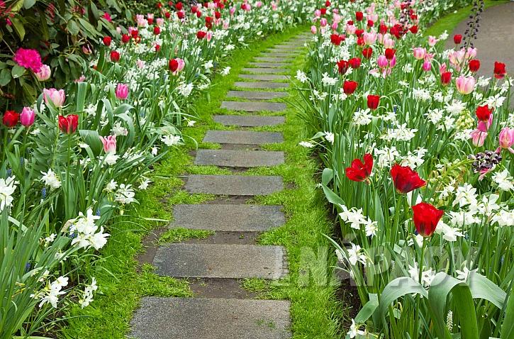 Zahrádka s jarními květinami