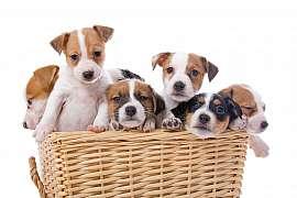 Není štěně jako štěně. Poradíme jak si správně vybrat a nenechat se napálit