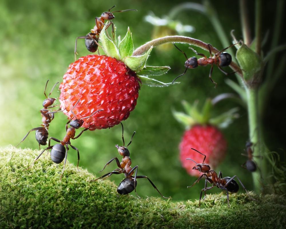 Jak se zbavit mravenců na zahradě