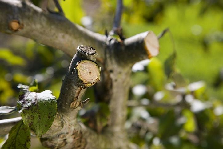 10 tipů na jarní prořez stromů