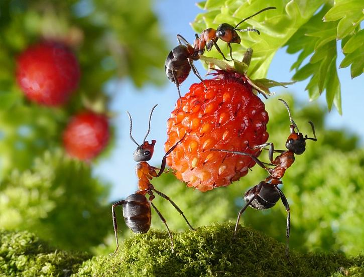 Škůdci nebo užiteční predátoři? Jak zařazujeme hmyz (Zdroj: Depositohotos)