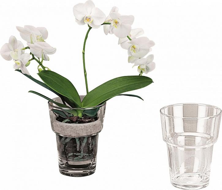 BAUHAUS Rádce – orchideje