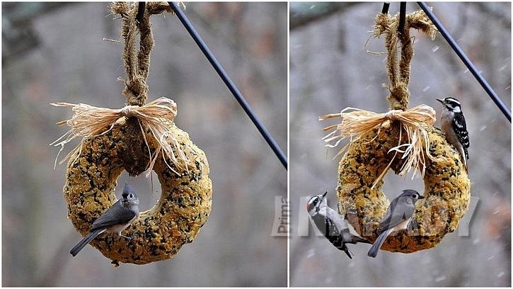 Ptačí bábovka