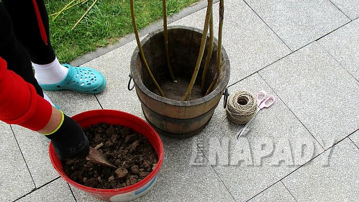Jak pěstovat hrášek v přenosné nádobě na zahradě i na balkoně pro radost (nejen) dětem 1