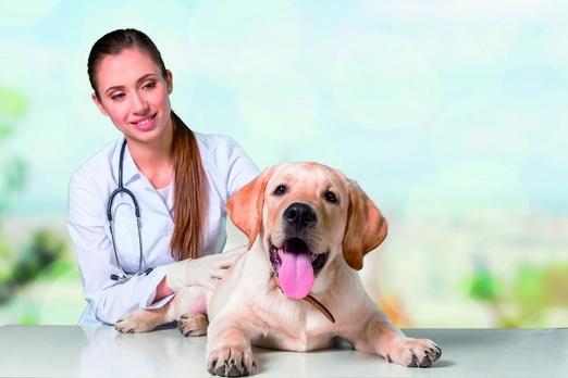 Psa chraňte před parazity po celý rok. Klíšťata a blechy mohou být aktivní již při teplotě pár stupňů nad nulou (Zdroj: ASPEN.PR s.r.o.)