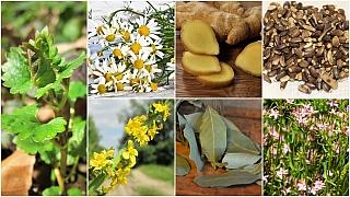 Jak přežít Vánoce aneb 7 nejúčinnějších bylin, které vám napraví zkažené žaludky