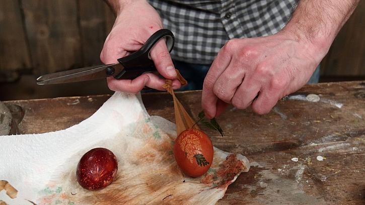 Barvení vajec v cibulových slupkách: obarvené vejce vyndáme z punčochy
