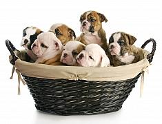 Pořizujeme štěně – základní péče, na kterou se připravit