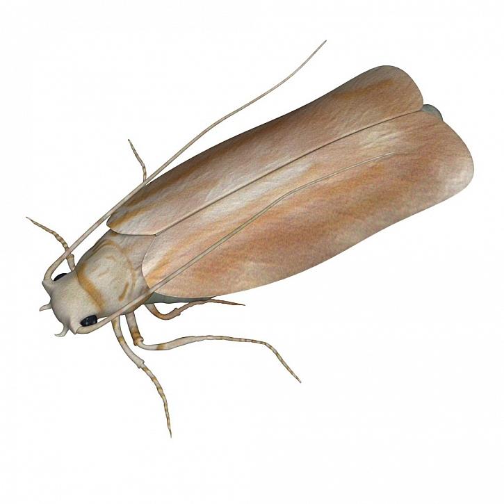 Tohohle motýlka v našich svetrech nebudeme vítat s nadšením