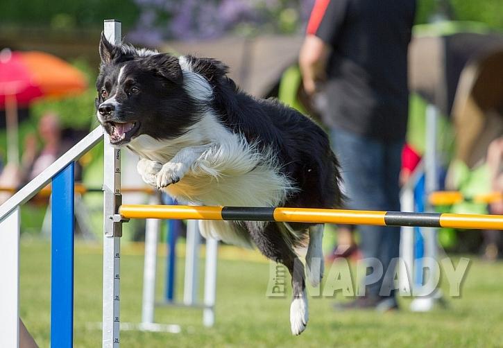 Báječný sport pro voříšky i psí šampiony 3
