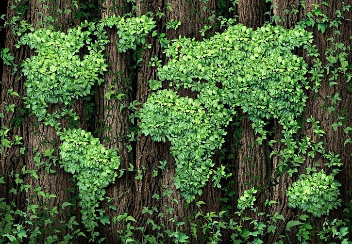 Ochrana lesů je zásadní pro jejich růst
