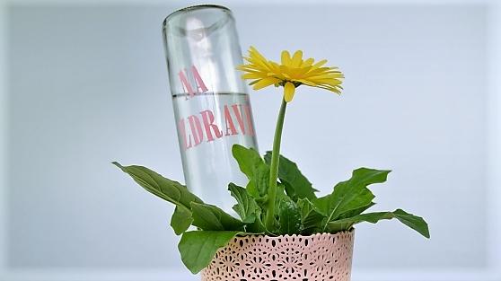 Zálivka ze skla: Jak se postarat okvětiny, když zůstanou samy doma