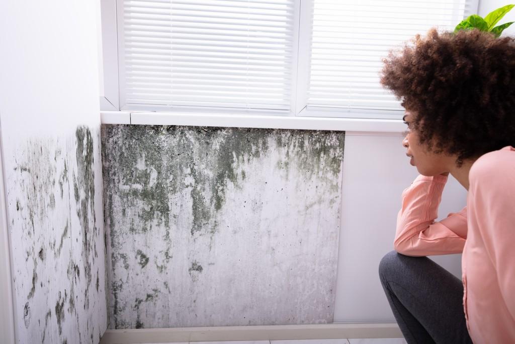 Plíseň v bytě může zapříčinit řadu problémů. Co s tím?