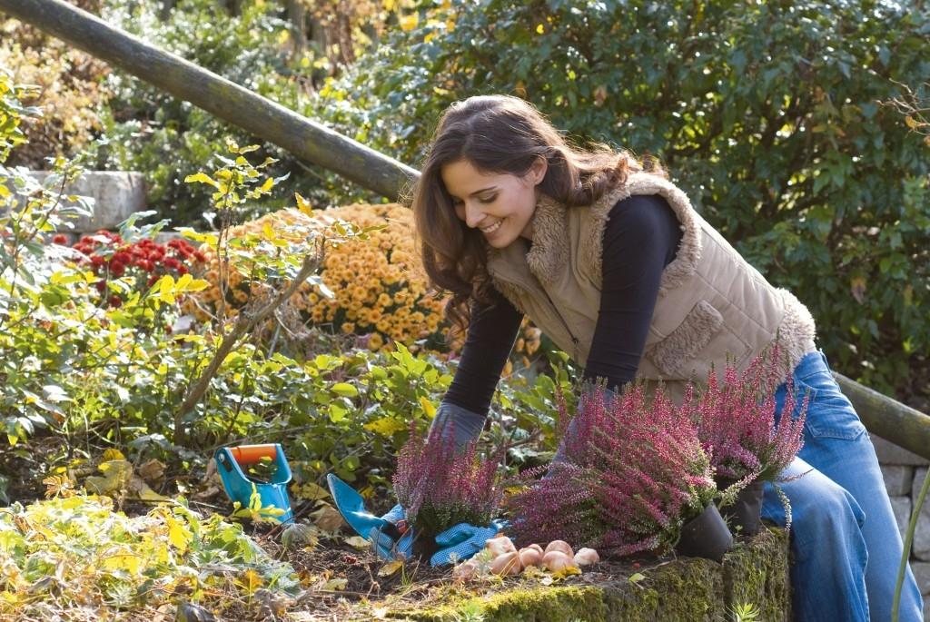 Sázení chladnomilných rostlin