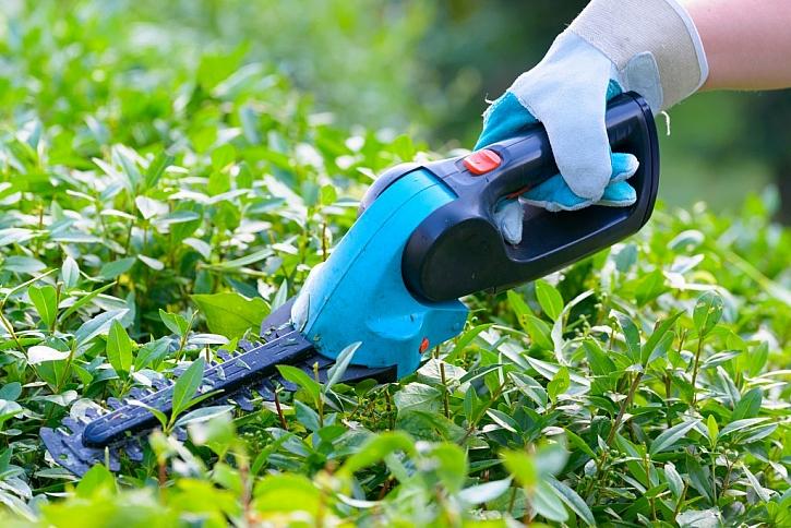 AKU nůžky na úpravu živých plotů jsou levné a přestavíte je na nůžky na trávu