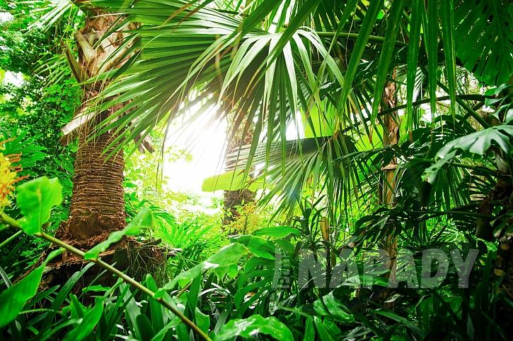 V našich podmínkách pěstujeme menší kultivary exotických pokojových rostlin (Zdroj: depositphotos.com)