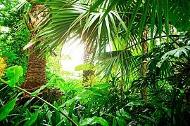 Pojďme se seznámit s méně známými exotickými pokojovými rostlinami