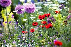 Druhová rozmanitost pro každou zahradu