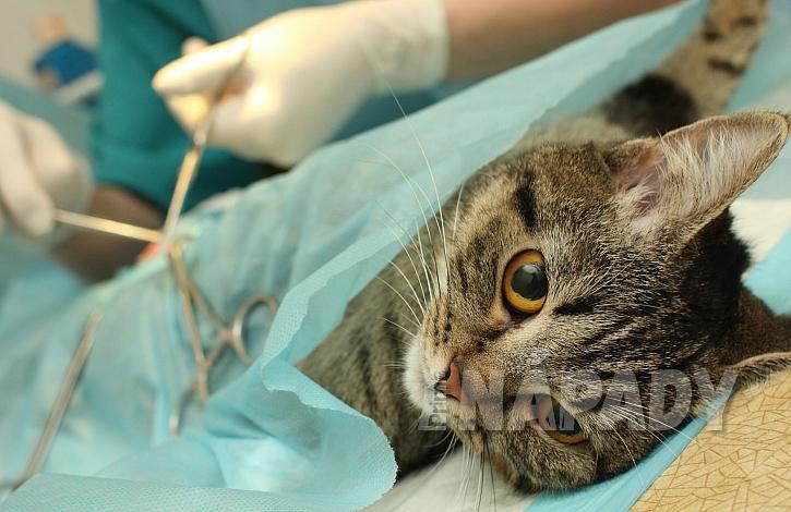 Operace kočky