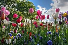 Plánujeme zahradu 2. díl, Venkovská zahrada