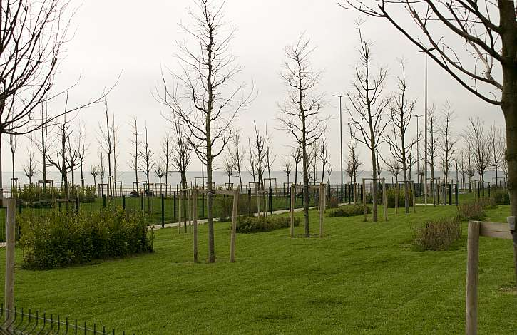 Kotvící ohrádky okolo stromů