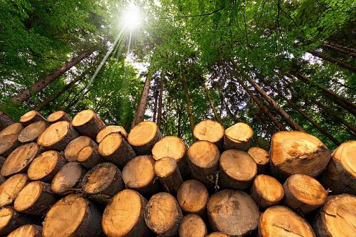 CESTY DŘEVA – z lesa až po finální produkty