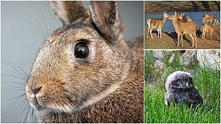 Kam na výlet: Vydejte se za zvířátky do zoo iza králičími šampiony na závody