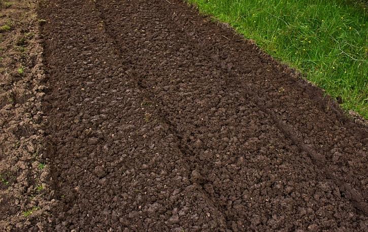 Připravený a řádně udržovaný zahradnický substrát v zahrádce je klíčem k vysokému výnosu