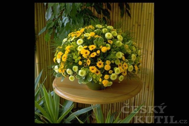 Krásná a vděčná chryzantéma