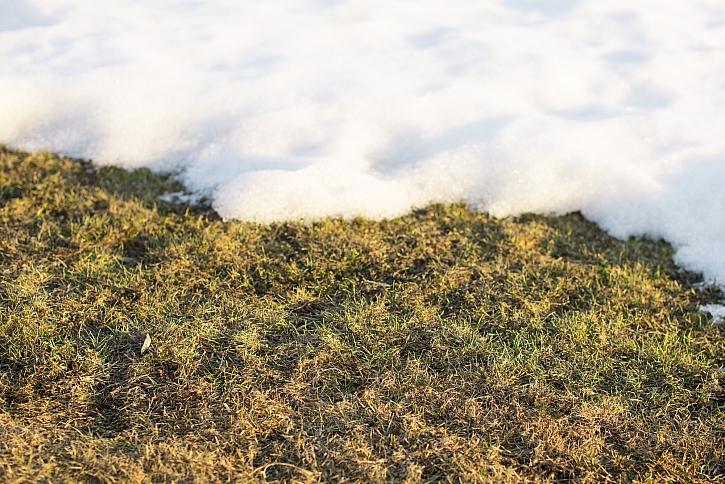 Poškozený trávník