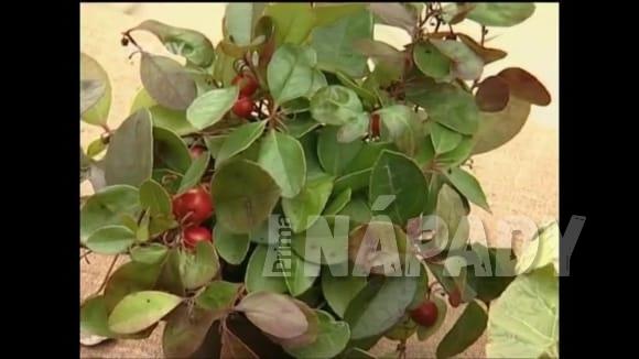 Rostliny, které využijeme v zimě v domácnosti